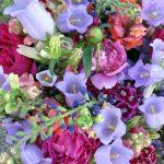 pretty lavender and fuschia flowers