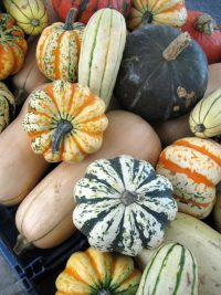variety of winter squashes