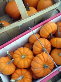 box of mini pumpkins