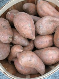 bushel of sweet potatoes