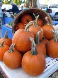 display of pie pumpkins on table