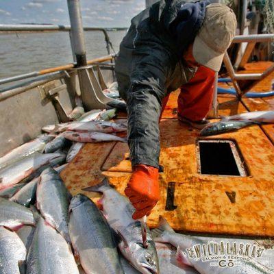 Wild Alaska Catch