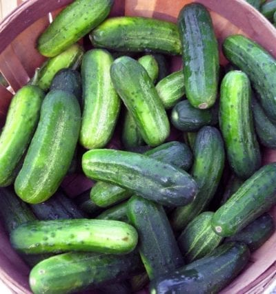 CucumbersBroadRIppleFarmersMarket