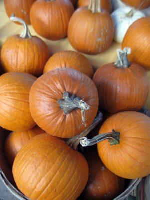 lots of pie pumpkins