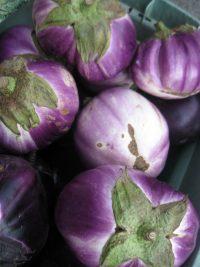 round Italian eggplants