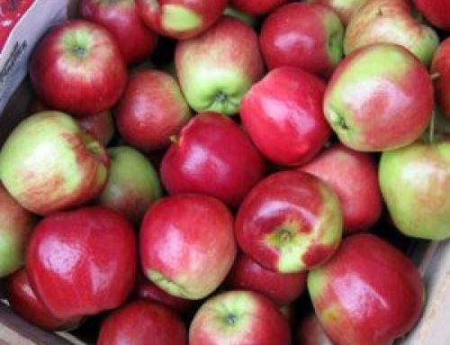 Meals from the Market: Addictive Apples