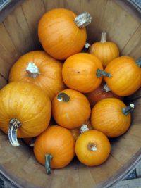 pumpkins in a bushel basket