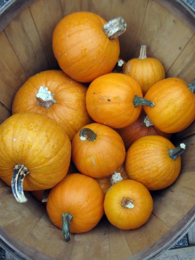 pumpkins in a bushel basket
