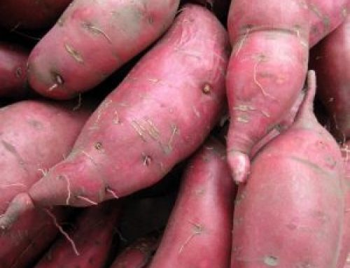 Meals from the Market: The Sweet Potato Life