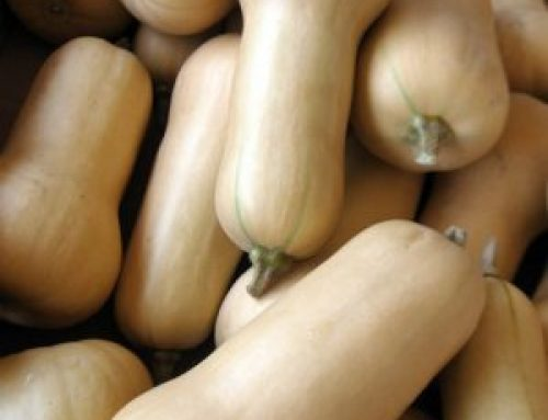 Meals from the Market: Bless the Butternut