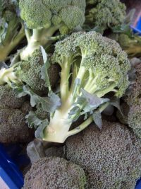 heads of broccoli