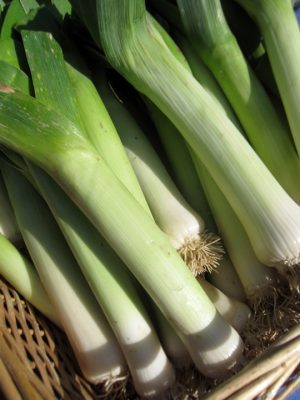 basket of leeks