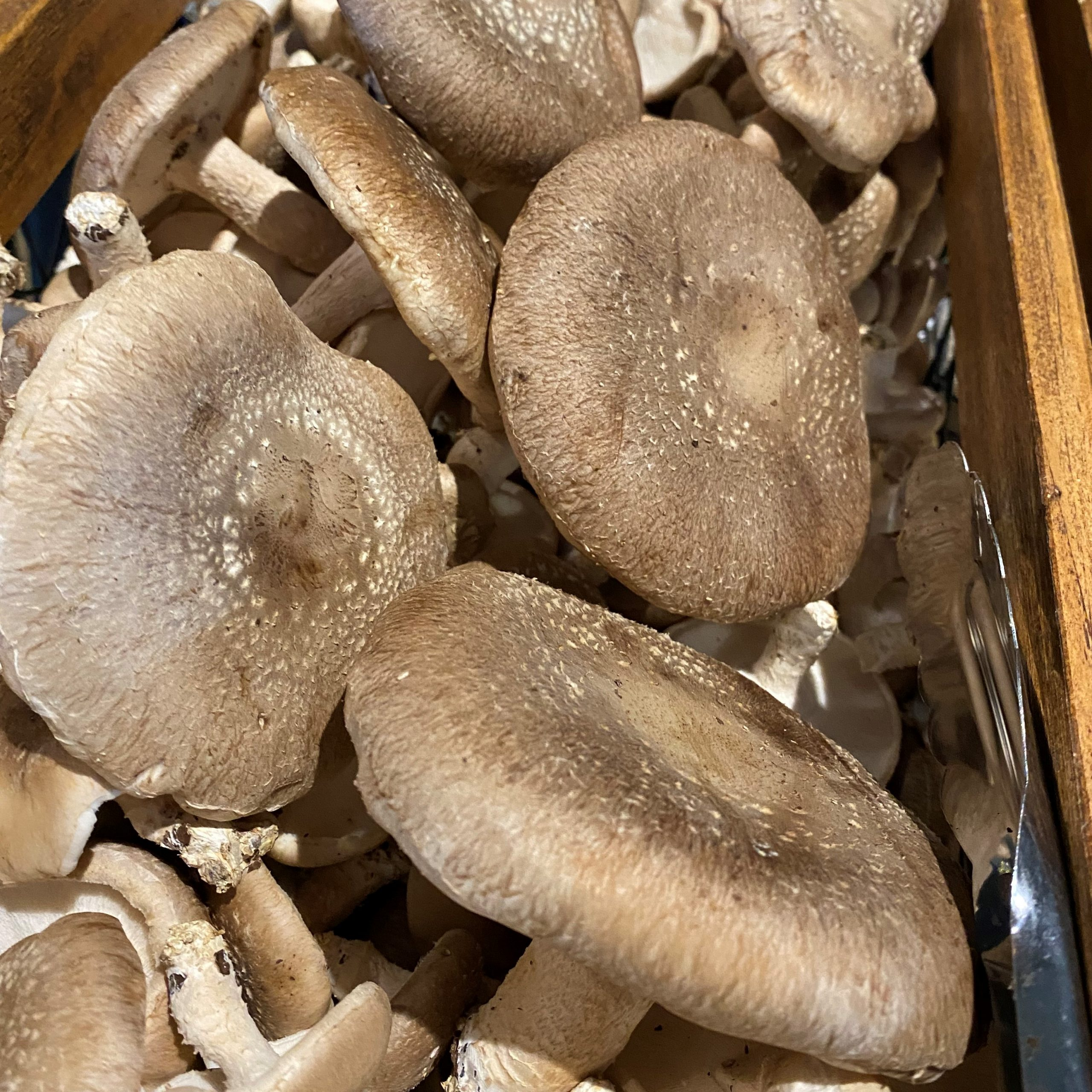 Meals from the Market: Magical Mushrooms