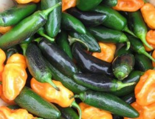 What's Cooking: Power-Play with Peppers