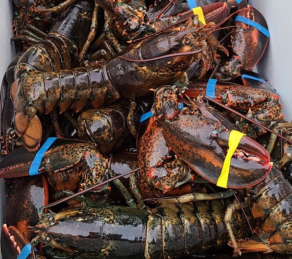 Farmers Market Lobsters