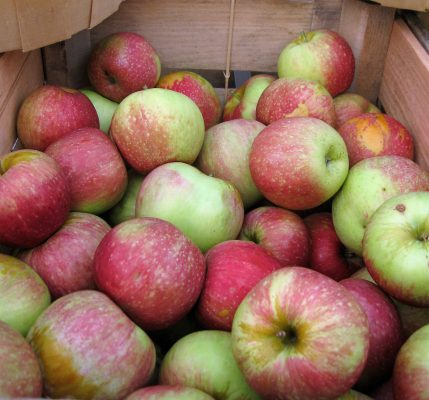 What's Cooking: How 'Bout Them Apples?